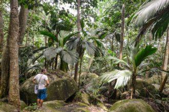 Seychely, džungle na ostrově Silhouette