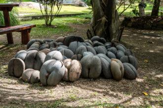 Seychely -ořechy Coco de Mer